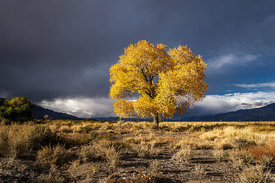 Stormy Tree Photograph - Still Fall by Cat Connor