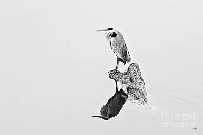 Pellegrin Photograph - Still Hunter by Scott Pellegrin