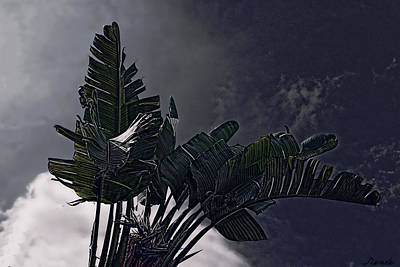 Art Print featuring the photograph Banana Tree -still In A Storm #3  by Renee Anderson