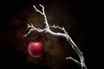 Raw Photograph - Still Life Apple Tree by Tom Mc Nemar