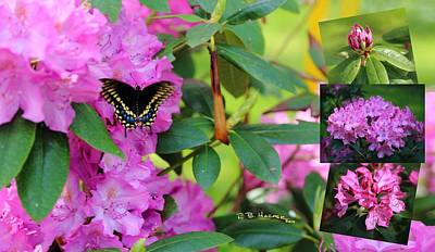 Photograph - Still Life At North Puffin - Rhododendron With Butterfly by R B Harper