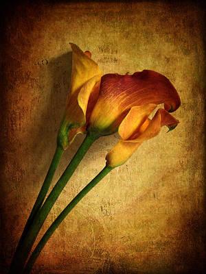 Calla Lily Wall Art - Photograph - Still Life Calla by Jessica Jenney