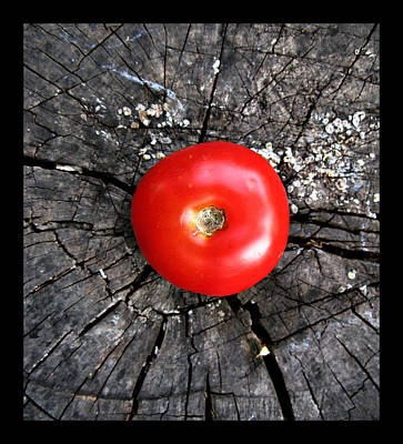 Photograph - Still Life Composition - Tomato Red Point Square by Daliana Pacuraru