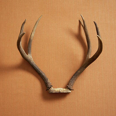 Still Life Of Deer Antlers On A Fabric Art Print by Gwen Rodgers