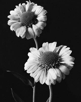Gaillardia Photograph - Still Life Of Flowers by J. Horace McFarland