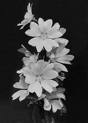 Bouquet Black Background Photograph - Still Life Of Flowers by Reginald A. Malby