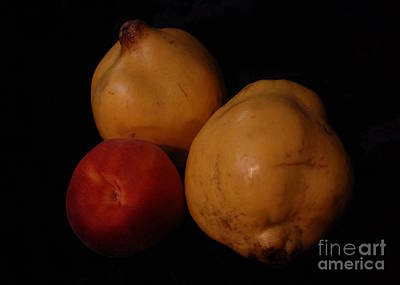 Photograph - Still Life - Quinces And Nectarine by Amanda Holmes Tzafrir