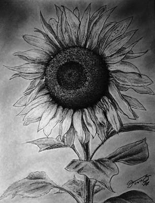 Still Life Drawings - Still Life The Lone Sunflower by Jose A Gonzalez Jr
