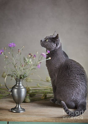 Vase Table Photograph - Still Life With Cat by Nailia Schwarz