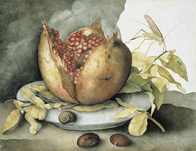 Painting - Still Life With Open Pomegranate by Giovanna Garzoni