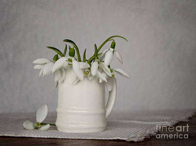 Snowdrops Photograph - Still Life With Snowdrops by Diana Kraleva