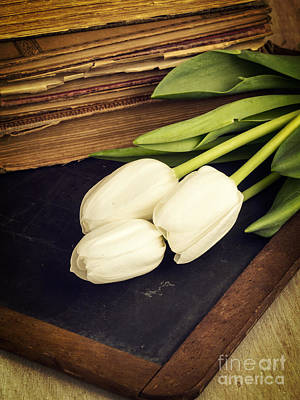 Still Life With White Tulips Old Books School Slate Art Print