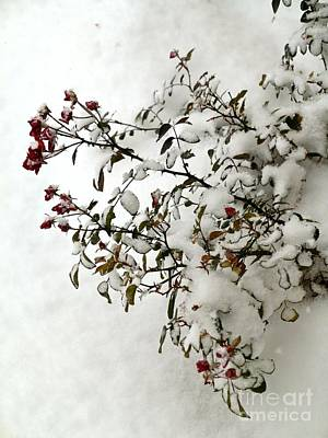 Photograph - Still Snowing by Phyllis Kaltenbach