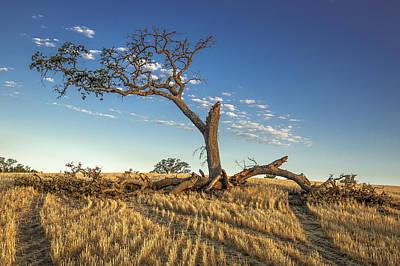 Photograph - Still Standin by Tim Bryan
