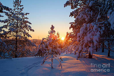 Photograph - Still Standing In The Winter Sunset by Ismo Raisanen