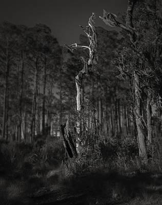 Florida Florals Photograph - Still Standing by Mario Celzner