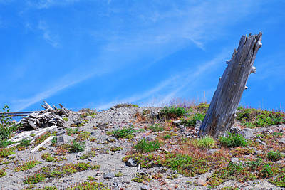 Photograph - Still Standing. Near Mount St. Helens 2012 by Connie Fox