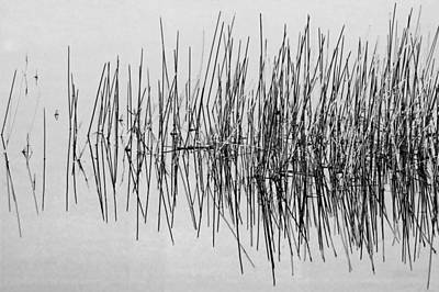 Photograph - Still Water And Grasses Painted Bw  by Rich Franco