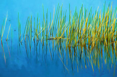 Photograph - Still Water And Grasses Painted  by Rich Franco