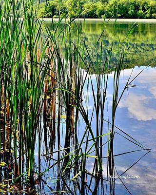 Photograph - Still Waters by Susie Loechler
