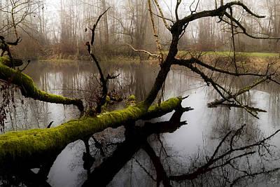 Photograph - Stillness by Lisa Knechtel
