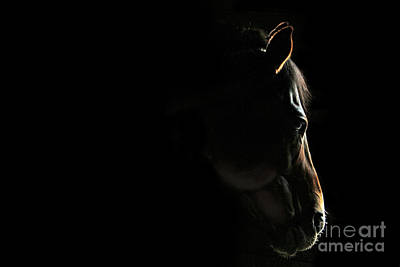 Photograph - Stillness by Michelle Twohig