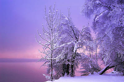 Winter Photograph - Stillness by Norbert Maier