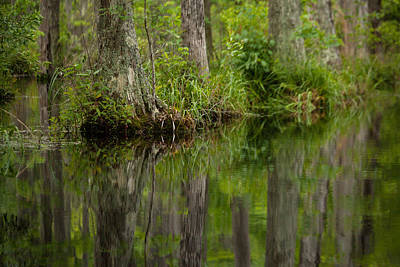 Photograph - Stillness Swamp by Karol Livote