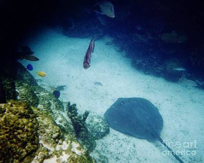 Photograph - Stingray On The Bottom by D Hackett