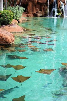Photograph - Stingrays And Waterfalls by Jane Girardot