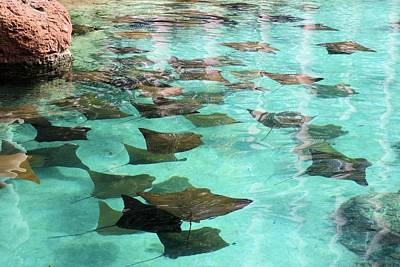 Photograph - Stingrays by Jane Girardot