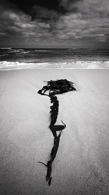 Photograph - Stingweed by Tim Nichols