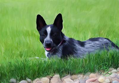 Cattle Dog Digital Art - Stock Dog Named Brook by Debra Baldwin