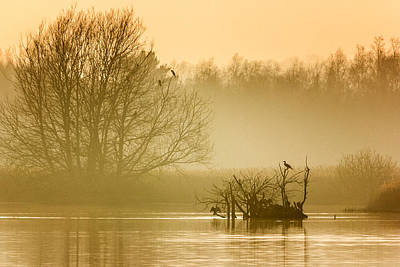 Cormorant Photograph - Stodmarsh by Ian Hufton