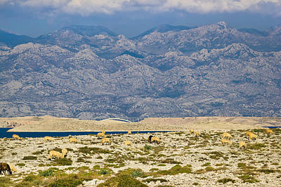 Photograph - Stone Desert Under Velebit Mountain by Brch Photography