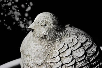 Pigeon Mixed Media - Stone Dove by Tommytechno Sweden