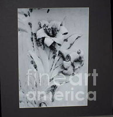 Stone Floral Original