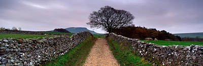 Bare Trees Photograph - Stone Walls Along A Path, Yorkshire by Panoramic Images