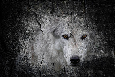 Photograph - Stone Wolf Graffiti by Steve McKinzie