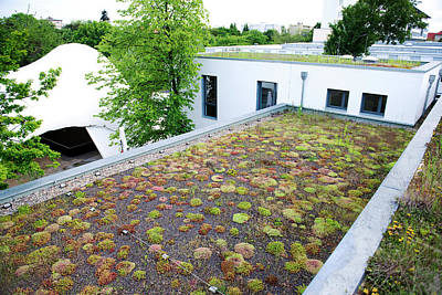 Rooftop Photograph - Stonecrop-planted Green Roof by Louise Murray