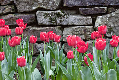 Photograph - Stoned Tulips by Robert Camp