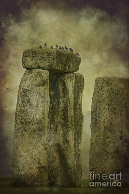 Photograph - Stonehenge Birds 6 by Clare Bambers