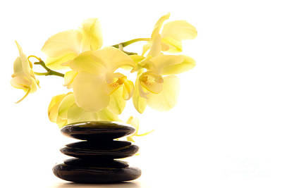 Massage Photograph - Stones And Orchid by Olivier Le Queinec