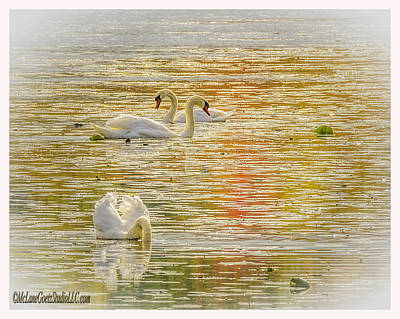 Photograph - Stoney Creek  Swans by LeeAnn McLaneGoetz McLaneGoetzStudioLLCcom