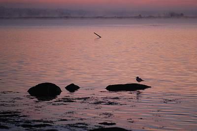 Photograph - Stonington Sunrise by Amy Porter