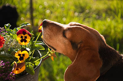 Photograph - Stop And Smell The Flowers by Eric Rundle