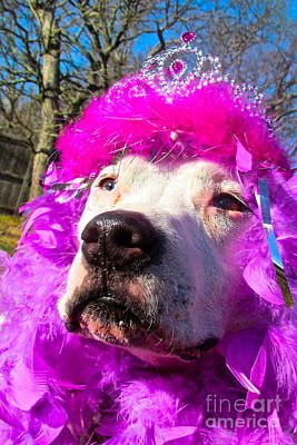 Stop Bsl Officer Do You Hate Me Because I'm A Pit Bull Or Cause I'm A Dude Wearing A Pink Tiara? Art Print by Q's House of Art ArtandFinePhotography