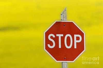 Stop Sign Print by John Shaw