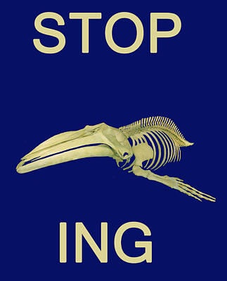 Photograph - Stop Whaling  by Eric Kempson