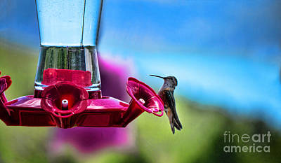 Photograph - Hummingbird Heaven by Brenda Kean